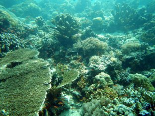 Sipadan reef