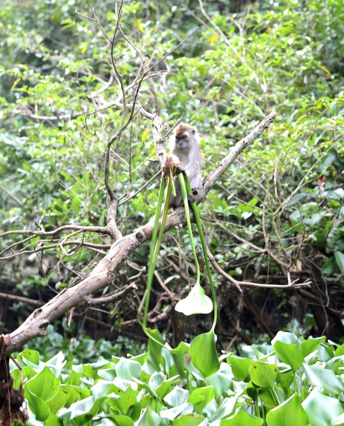 Macaque getting dinner (scene 8)