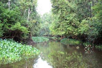 Kinabatangan River tributary