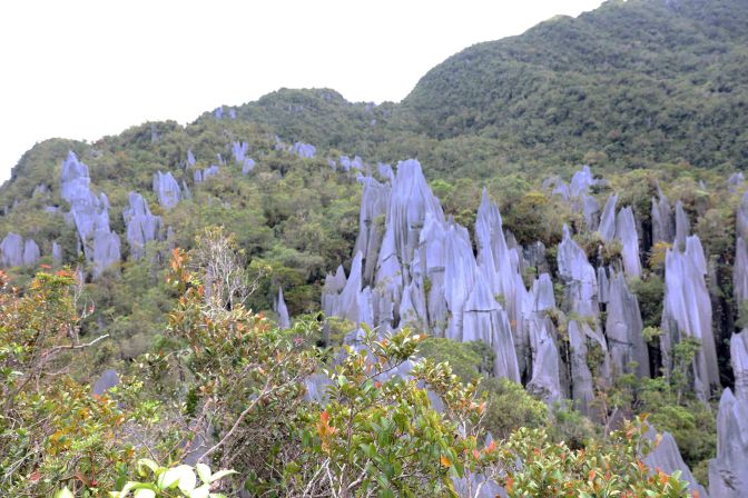 The Pinnacles, Gunung Mulu National Park