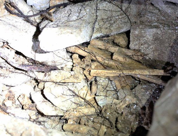 Human Bones in Headhunter's Cave