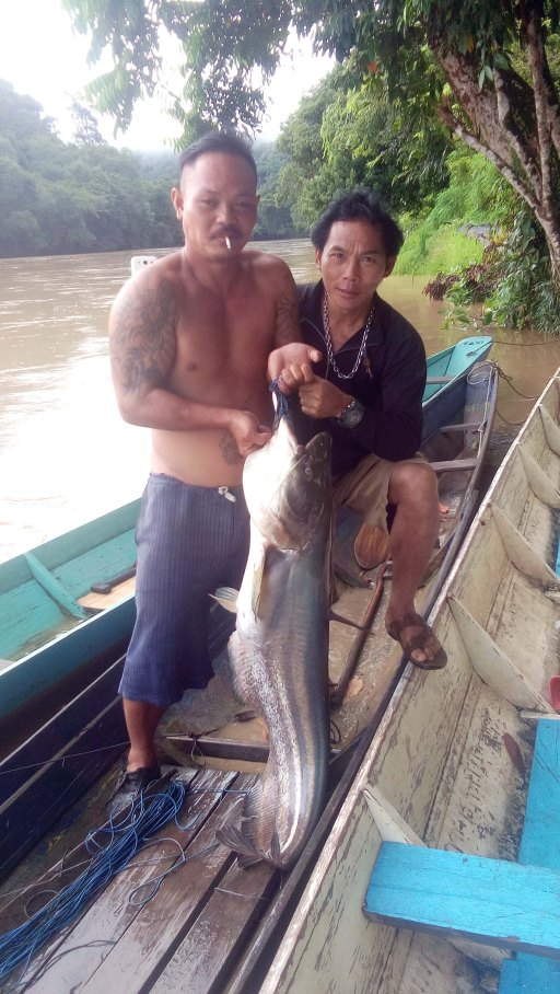 Fishing, Tutoh River