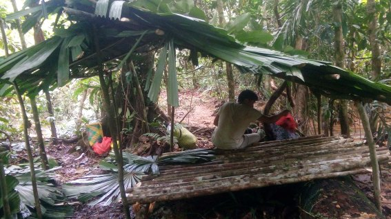 Jungle Survival Camping