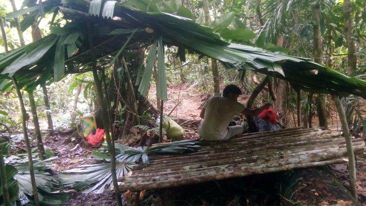 Jungle Survival Camping