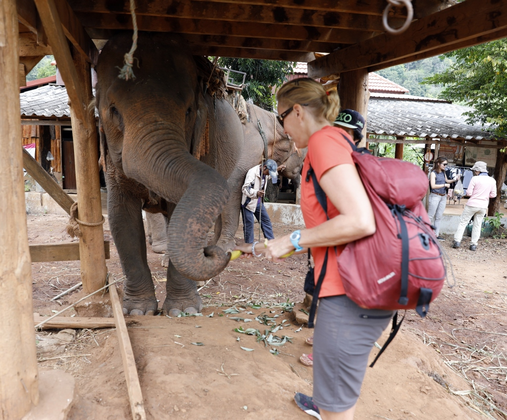 Feeding elephants, Chiang Mai