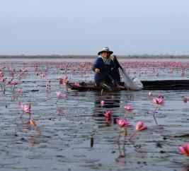 Fisherman on the Red Lotus Sea