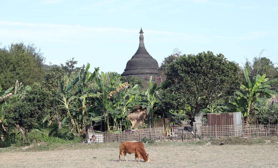 Mrauk U pagoda surrounded by pastures and rice fields