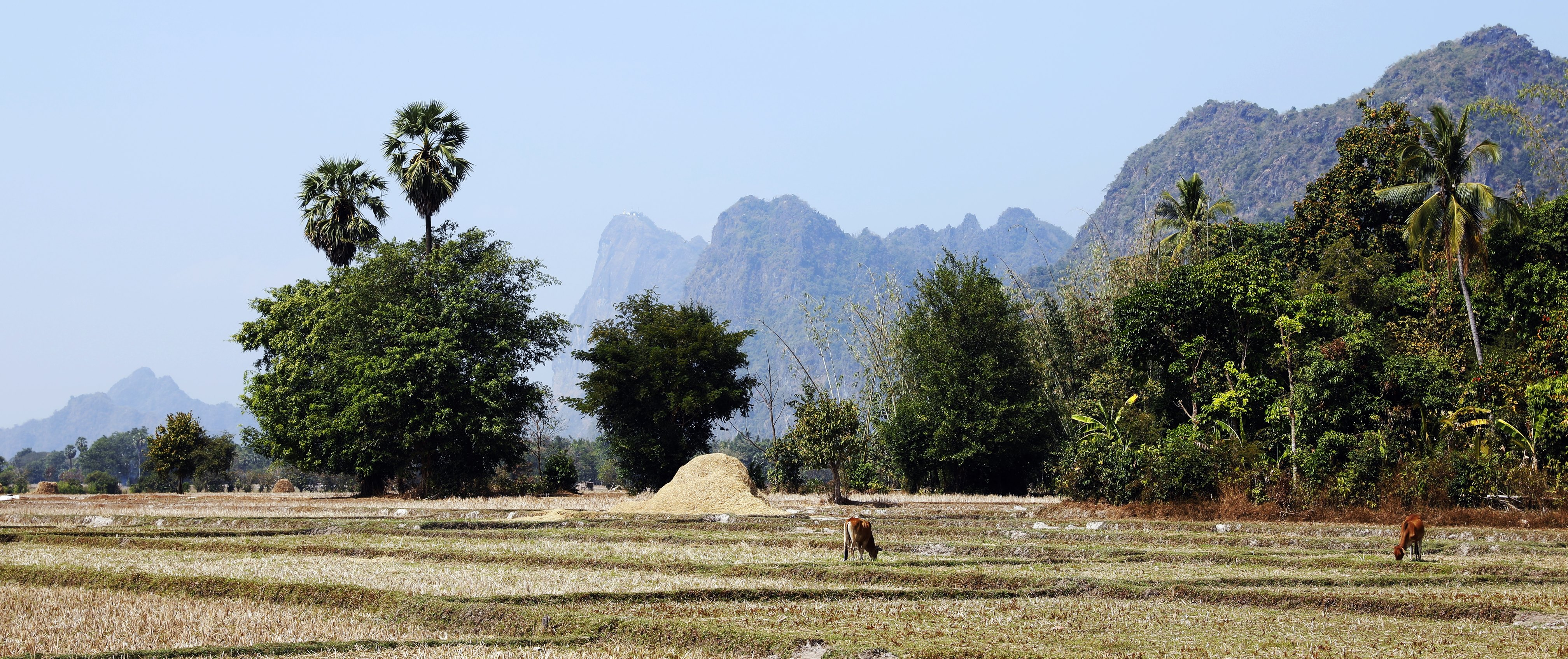 Kyuap Kalap