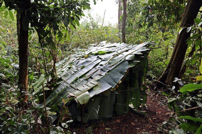 Jungle shelter