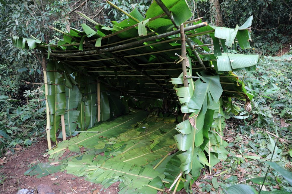 Jungle shelter