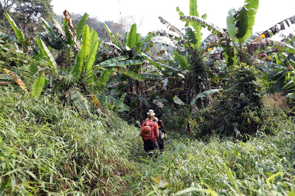 Trekking in the Nam Ha National Park