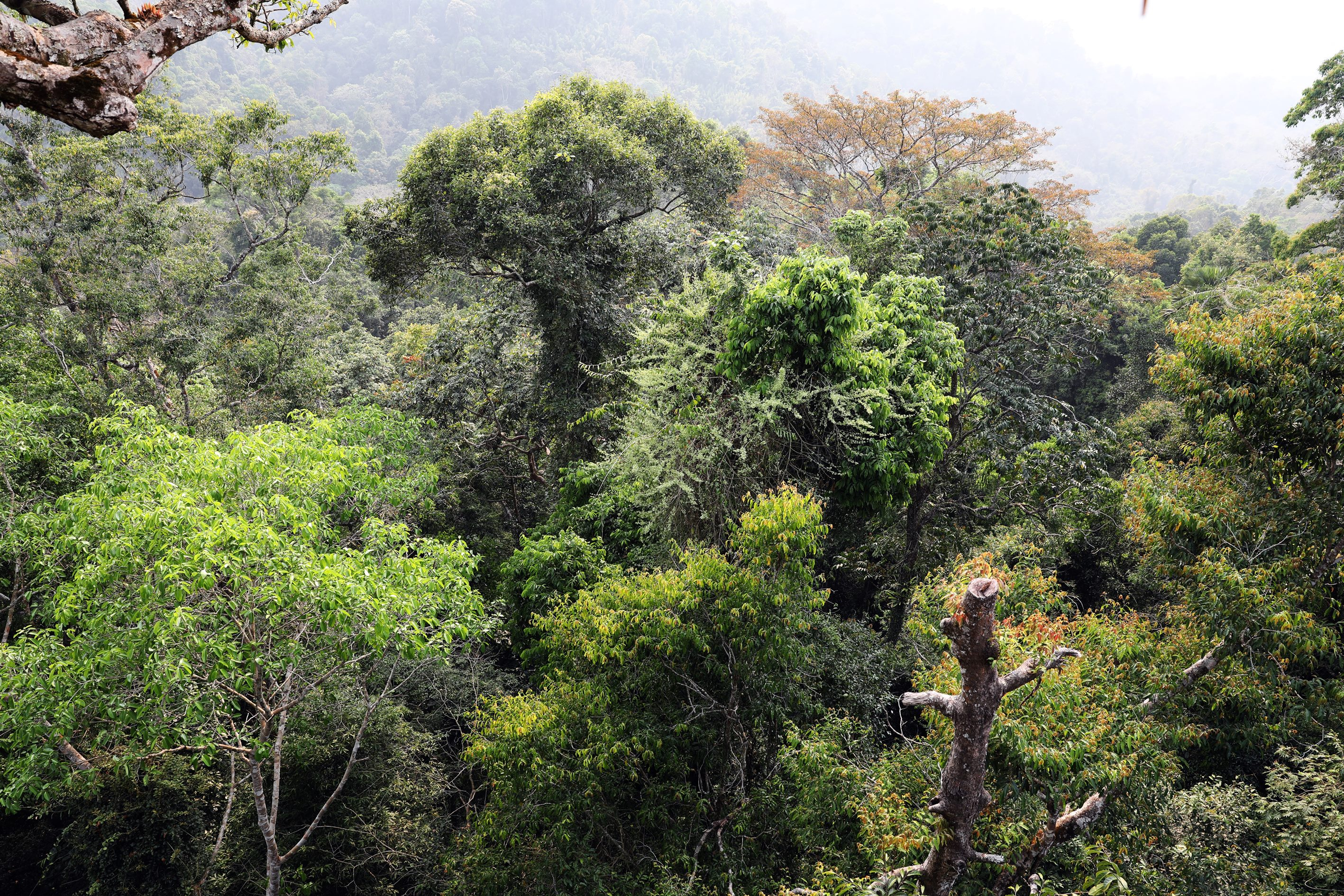 View from treehouse in Nam Kan National Park