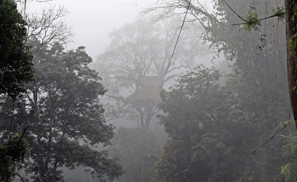 Treehouse in the misty morning