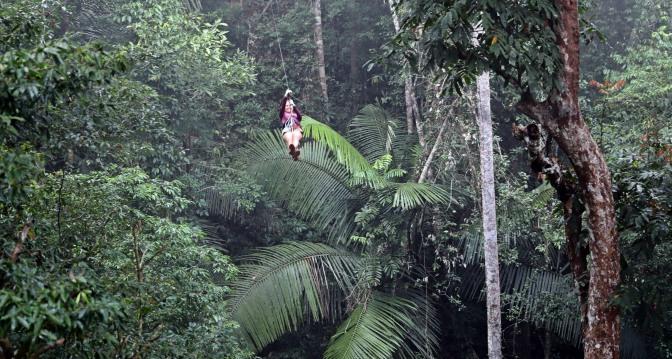 Maggie ziplining over ferns