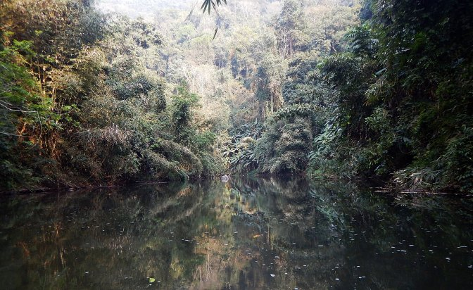 Dense jungle on the Nam Ha River banks