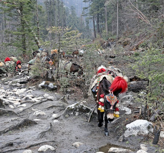 Horse carrying loads on the trek