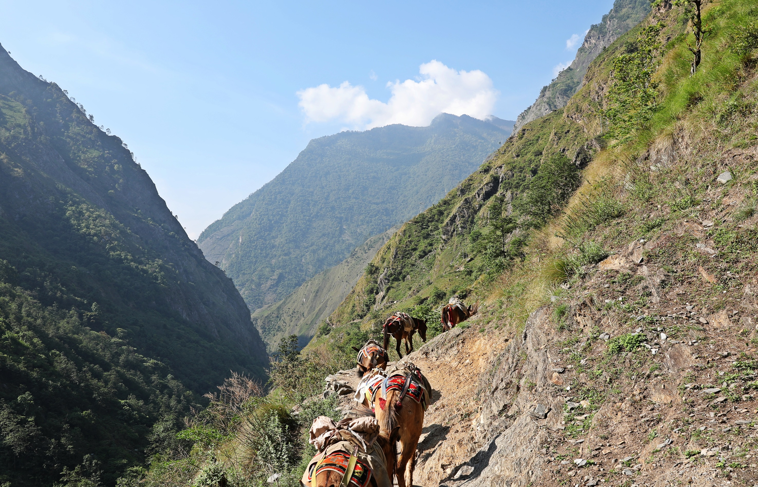 Mules carrying supplies to the villages