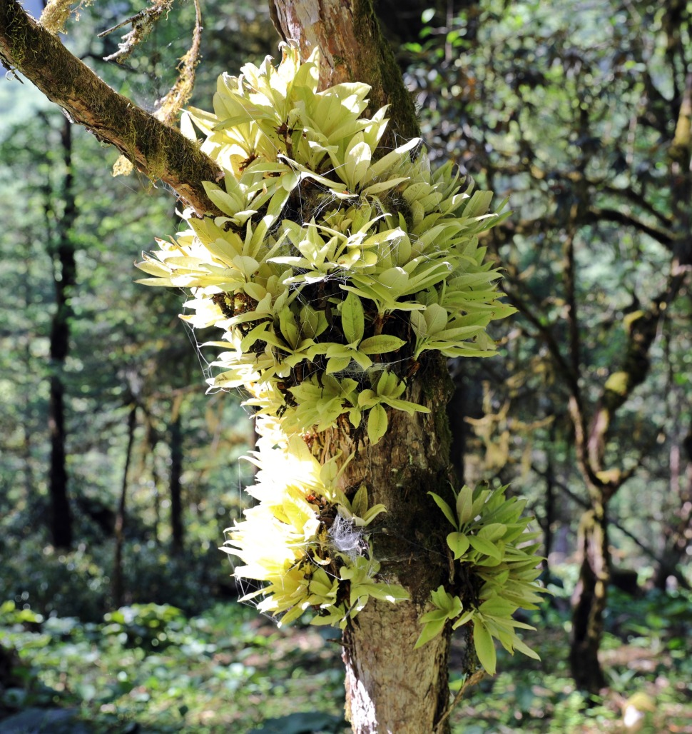 Jungle tree with a parasitic fern