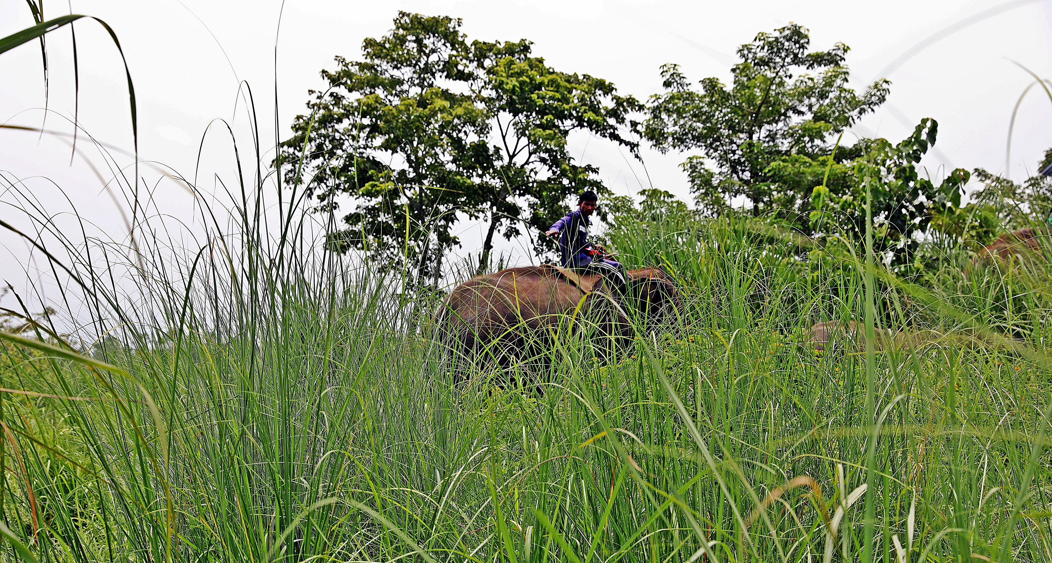Park Ranger patrolling on an elephant