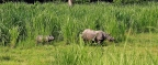 Rhinos, Rafting and Flying in Nepal