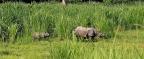 Rhinos, Rafting and Flying in Nepal