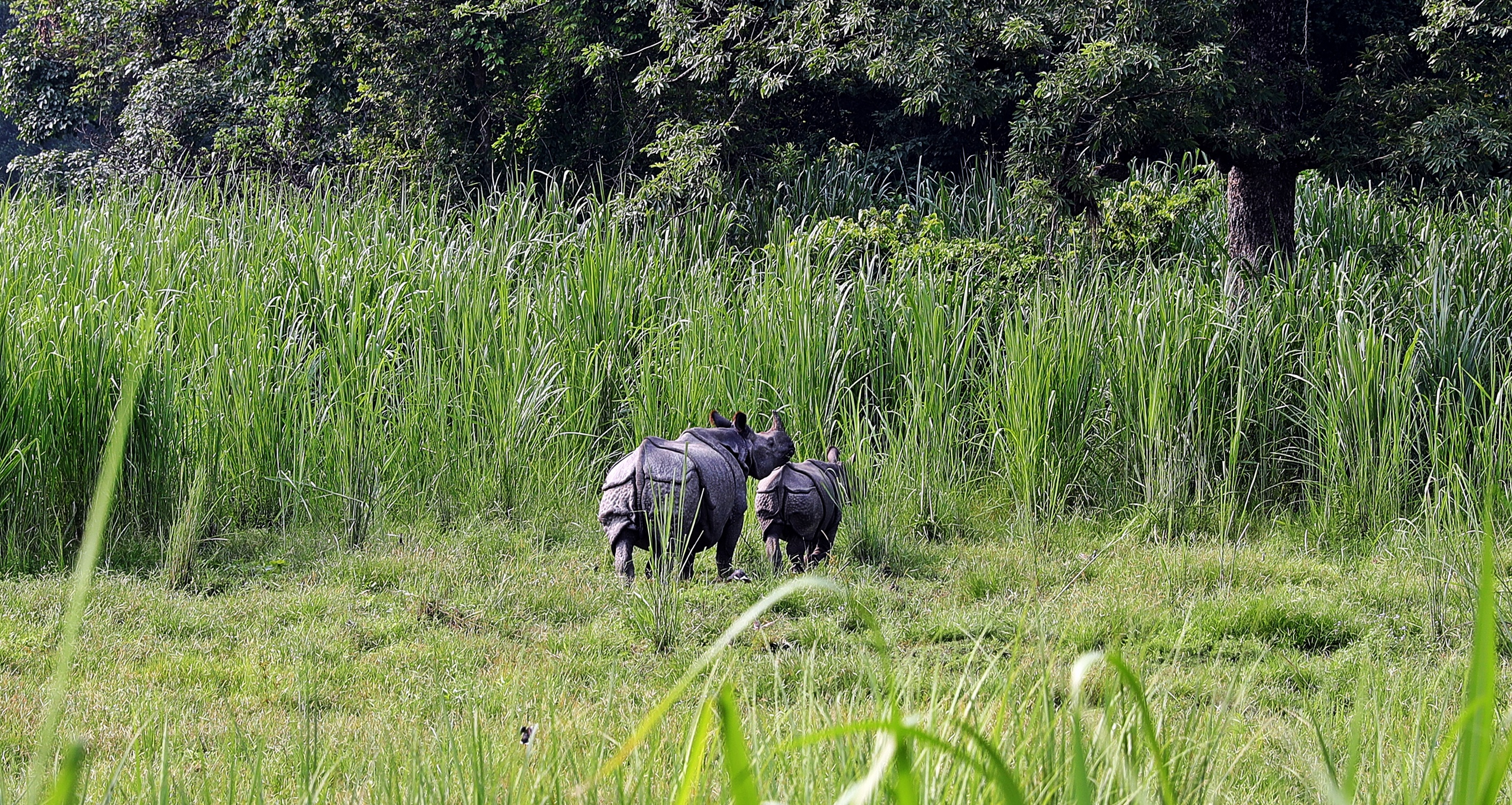 One-horned rhino mother and baby with armour