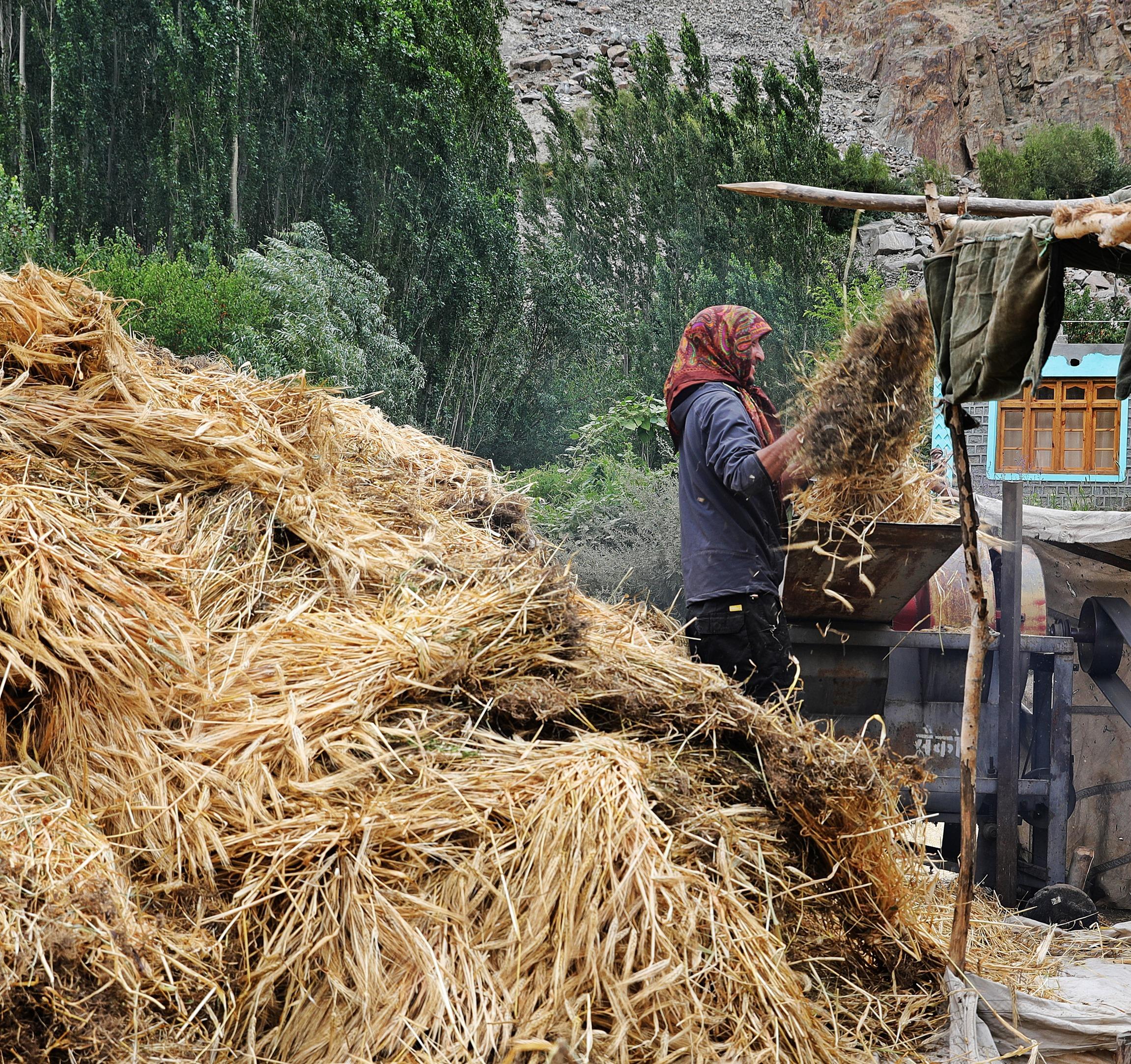 Dehusking barley, Turtuk