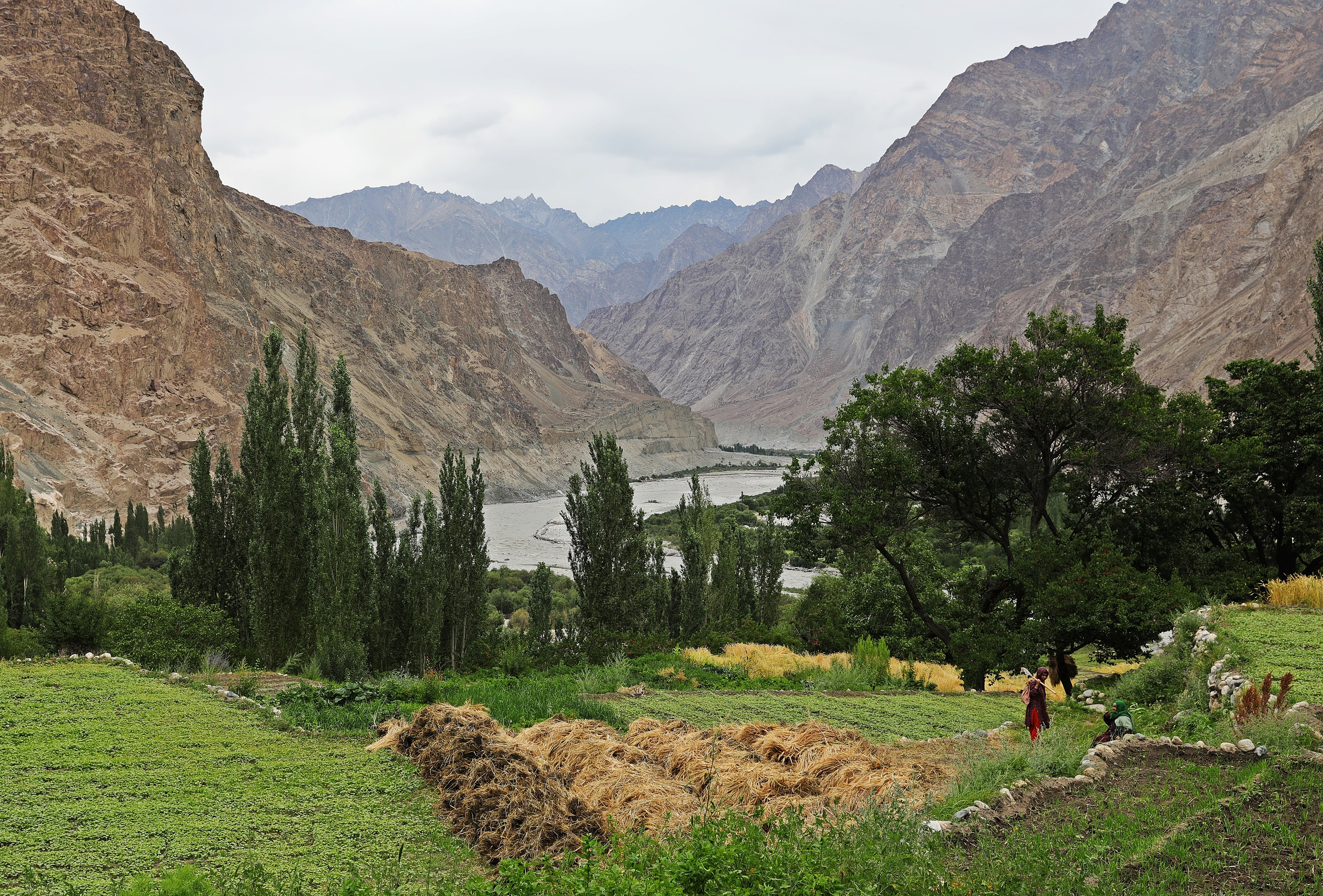 Barley fields above the Shyok River, Turtuk