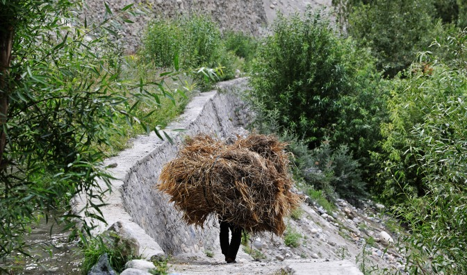 Turtuk villager carrying a load of barley