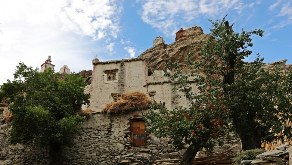 Home with apricot trees in Chiling, Ladakh