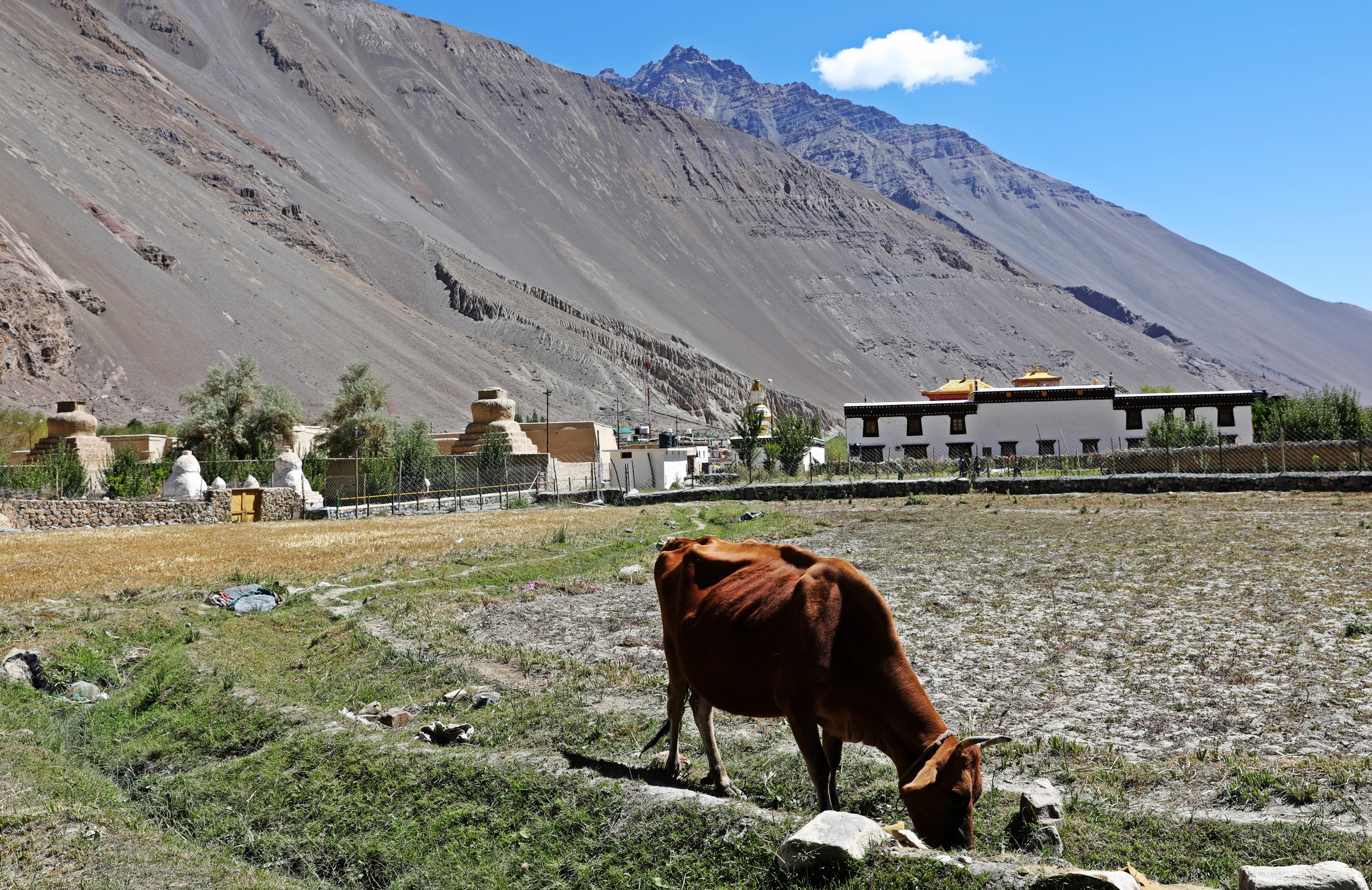 Fields around Tabo Gompa, Himachal Pradesh