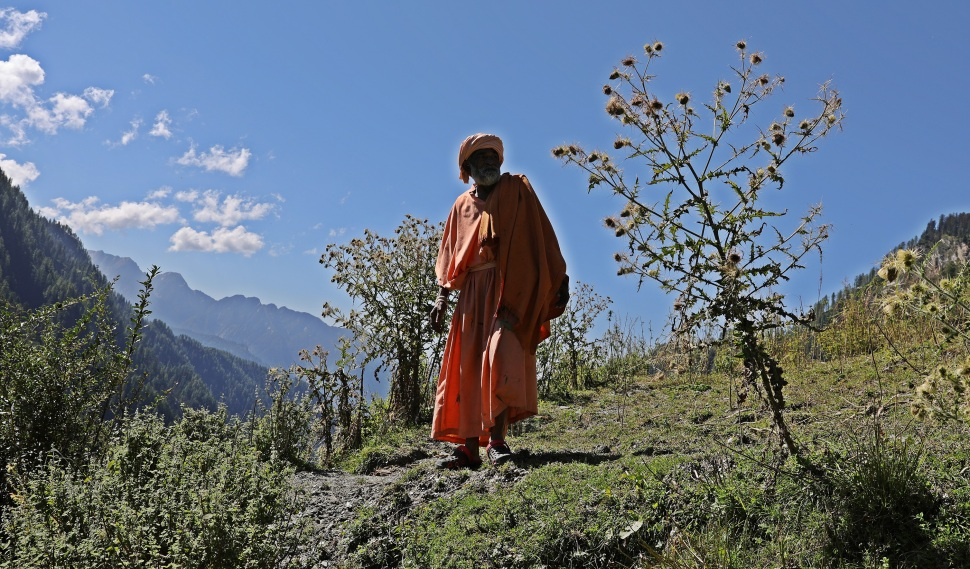 A Sadhu picking marijuana buds near Malana, Himachal Pradesh