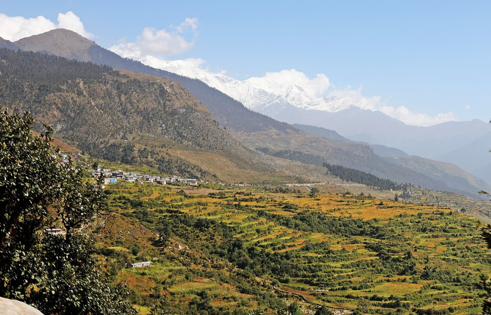 Amaranth terraces with the Nanda Devi Range behind