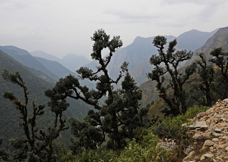 Karshu trees