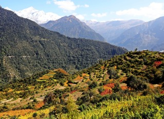 Amaranth terraces with the Nanda Devi Range behind