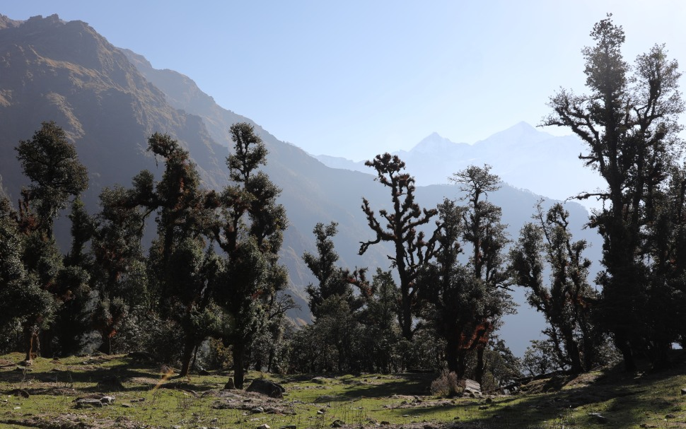 Karshu Trees on the Kuari Pass Trek