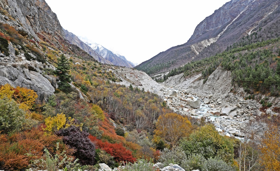 Fall colours in Bhagirathi Valley