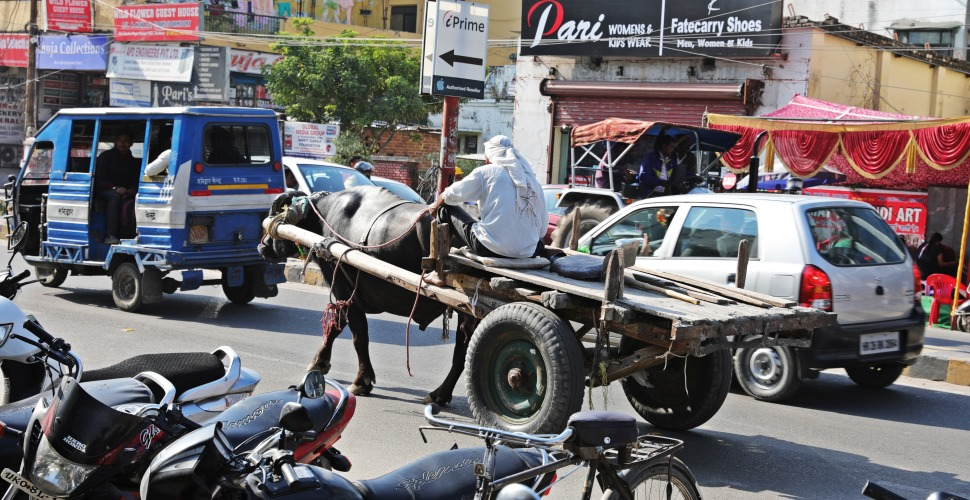 Buffalo cart in downtown Haridwar traffic