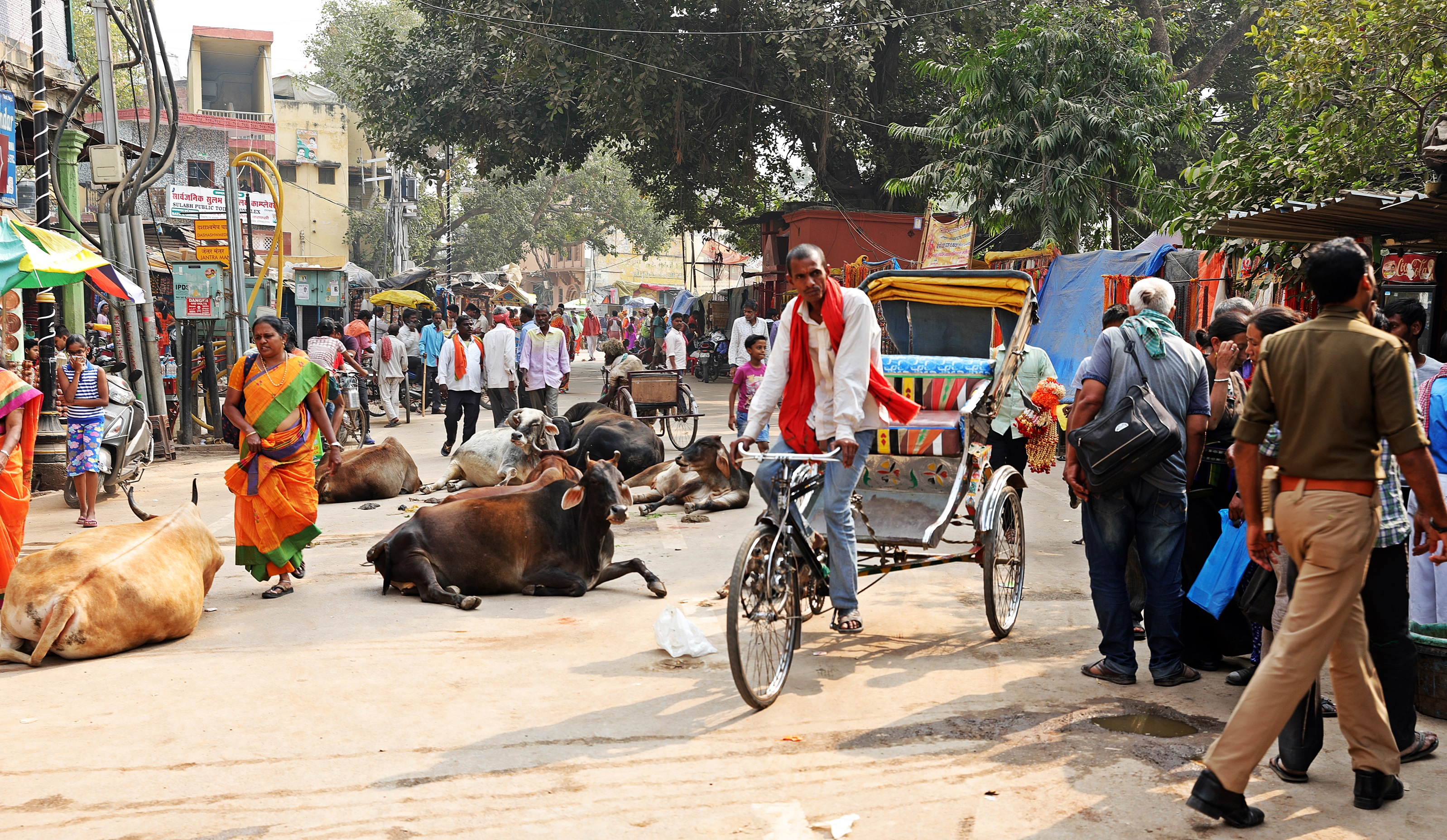 Street cows, Varanasi