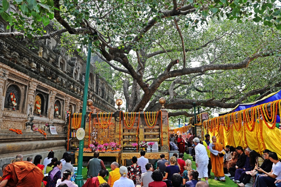 Bodhi tree behind Mayabodi Temple, Bodhgaya
