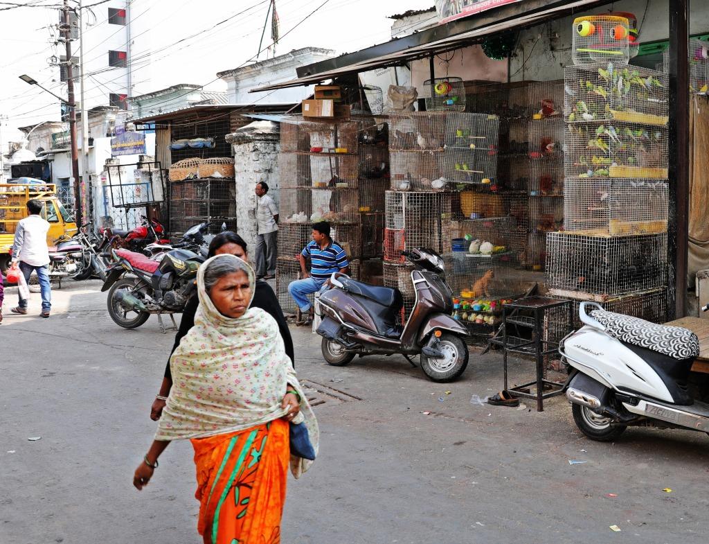 Bird market, Hyderabad
