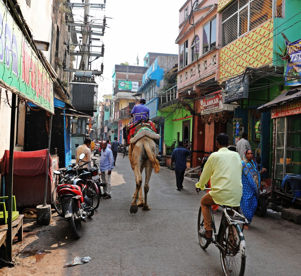 Camel on the streets of Puri