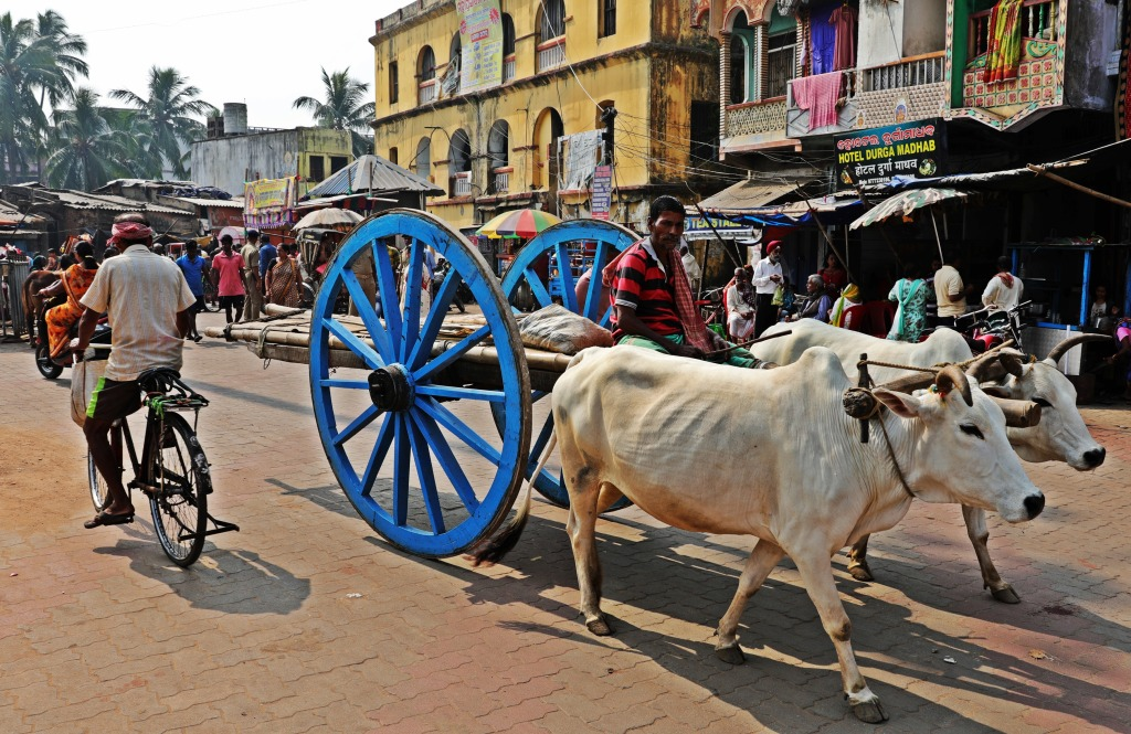 Oxen cart outside Jagannath Mandir, Puri
