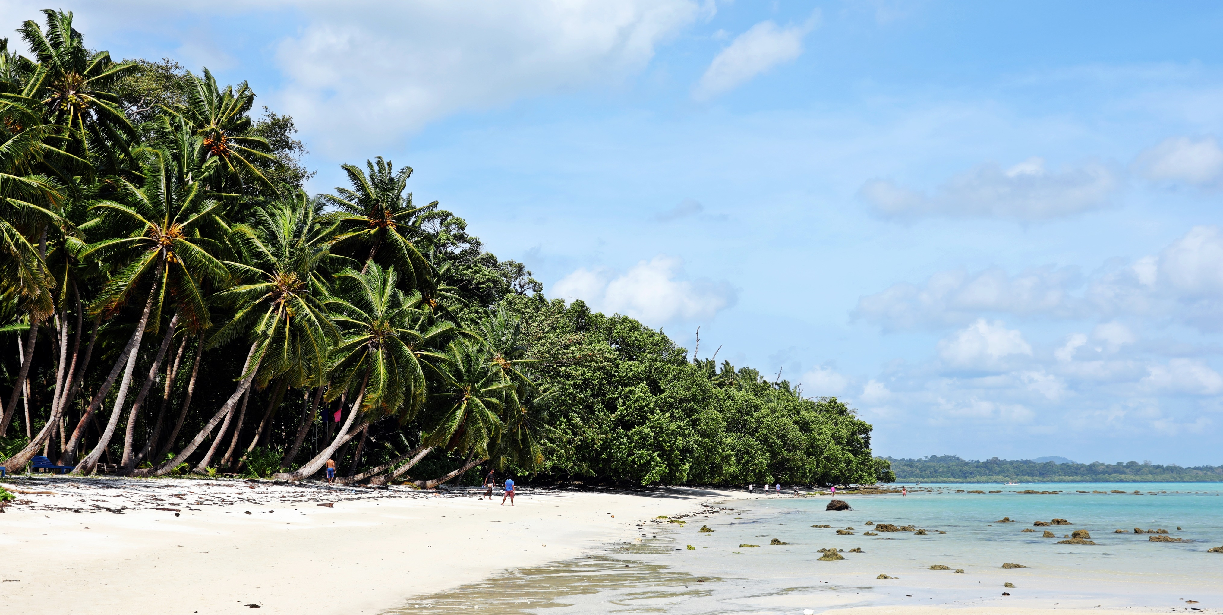 Palm and mangrove trees, Havelock Island