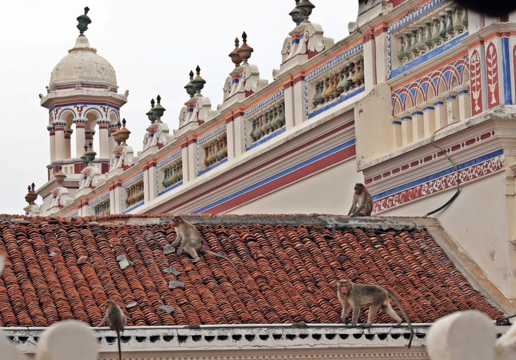 Monkeys on the rooftop, Chidambara Vilas
