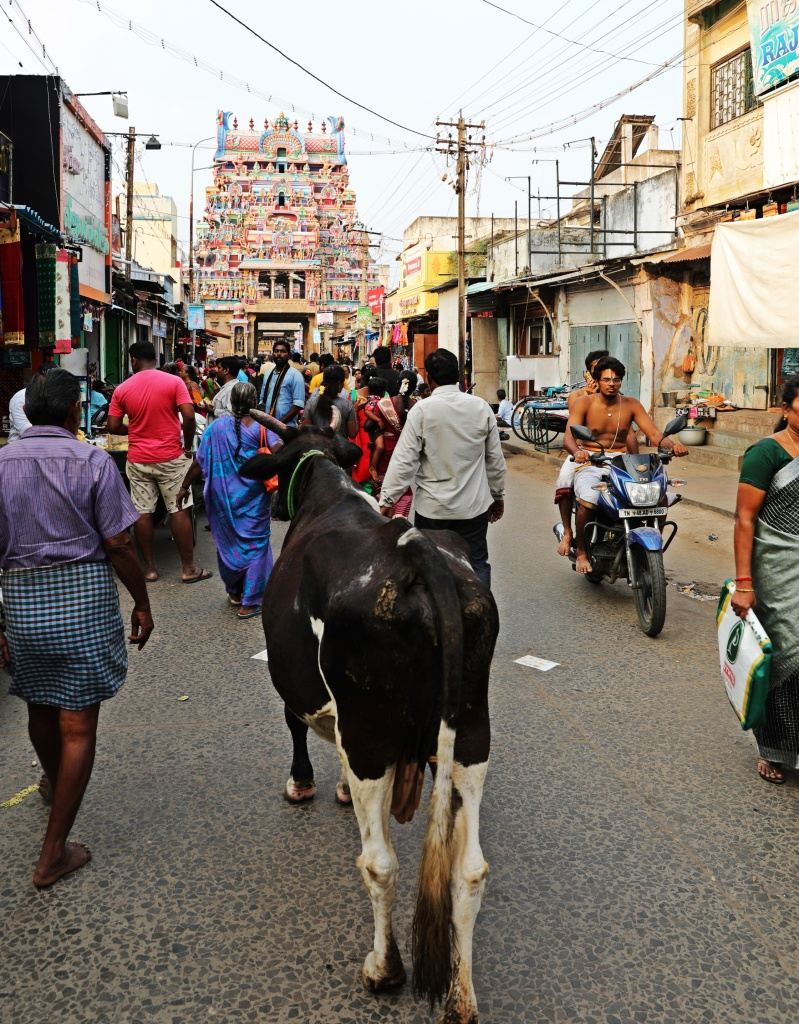 Gopuram and a cow, Sri Ranganathaswamy Temple, Trichy