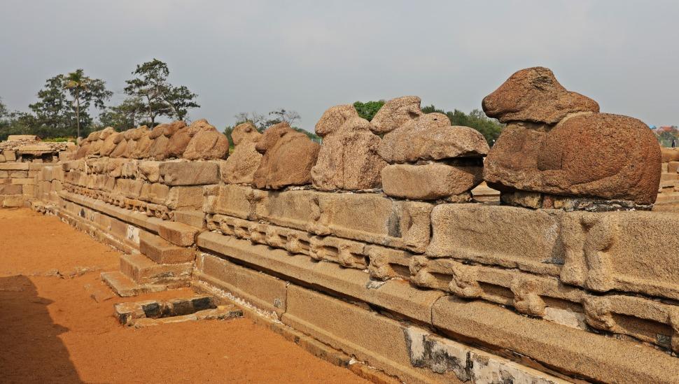 Bull statues, Seashore Temple, Mamallapuram