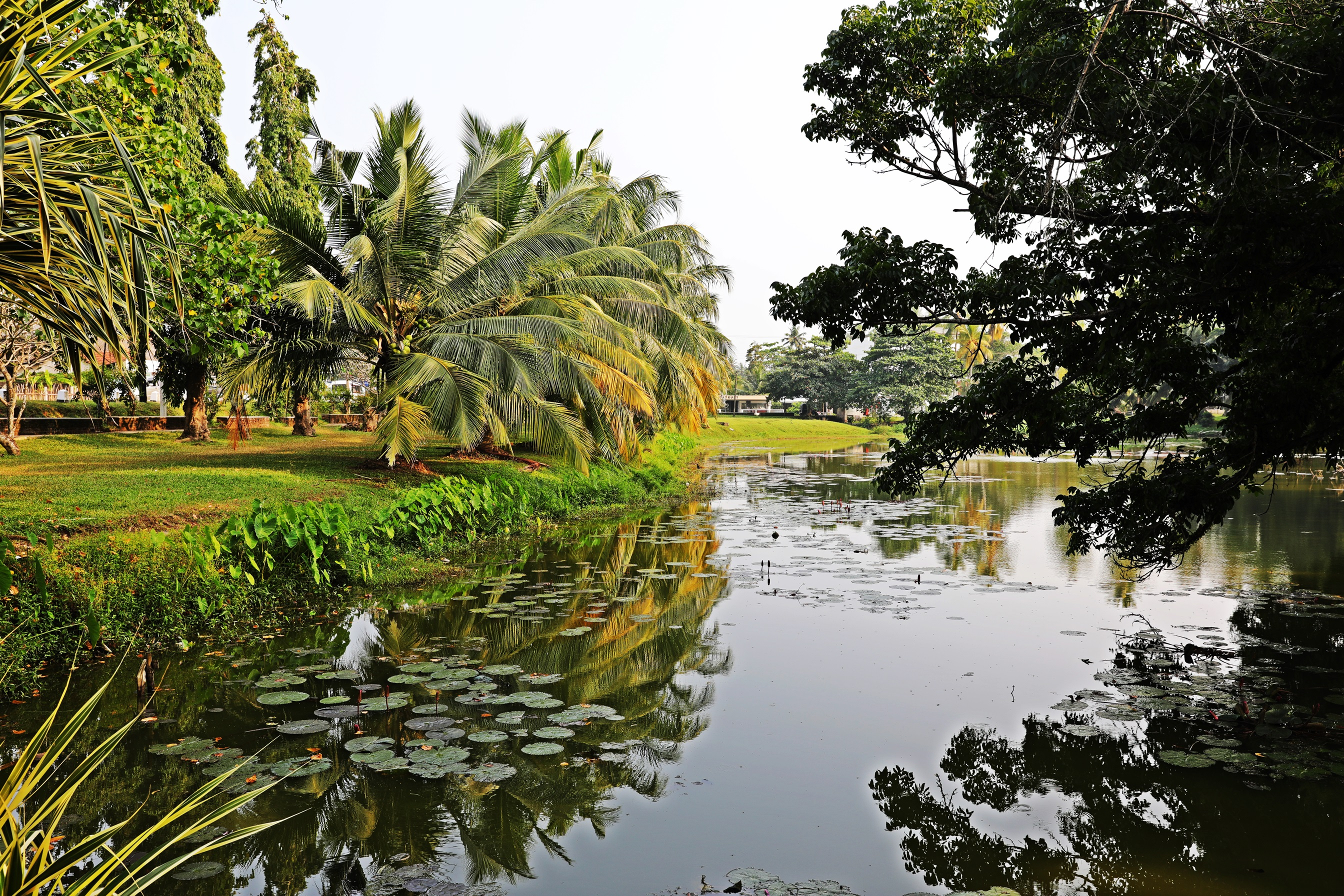 Bentota pond