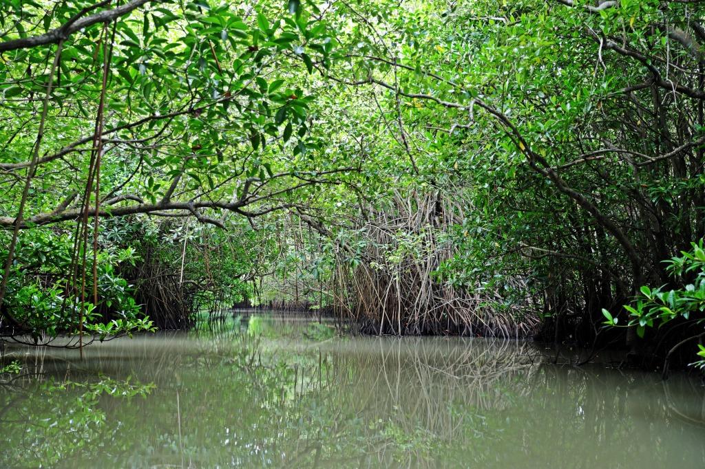 Mangroves, Tangalle lagoon