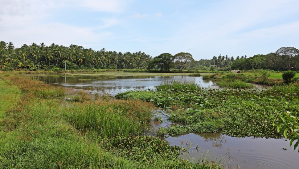 Country side near Tangalle, Sri Lanka